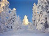winter-dia-11