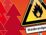 Waldbrad1